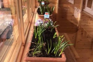 potting shed flowers