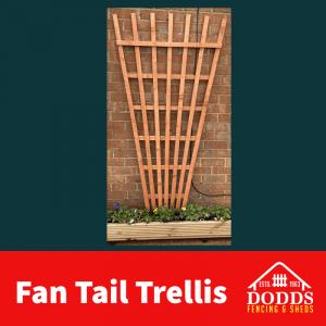 Fan Tail Trellis Treated golden brown