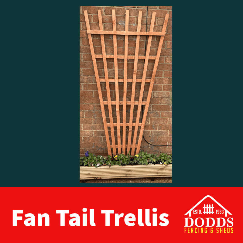 Fan Tail Trellis Treated golden brown